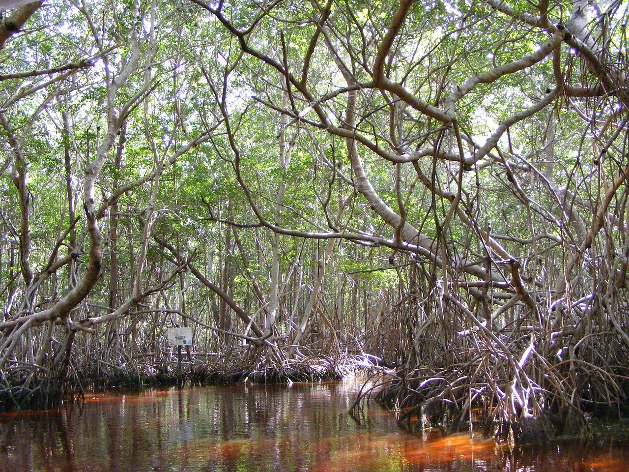 La Tovara Mangrove Jungle