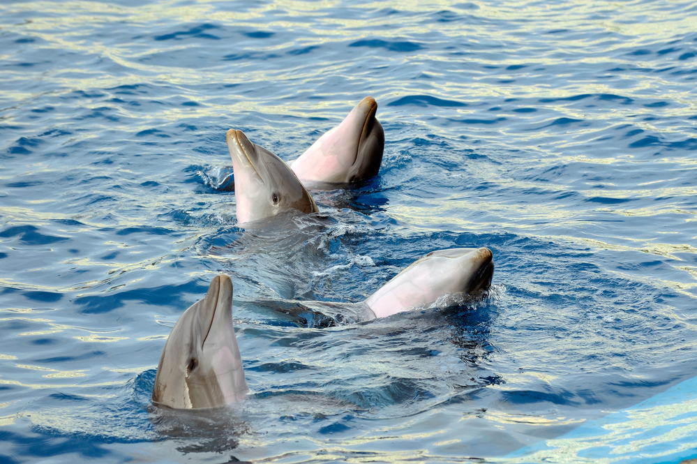 dolphin and whale watching tours Puerto Vallarta